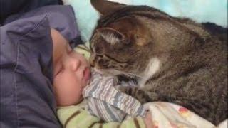 """Cats Love Babies Compilation"" || CFS"