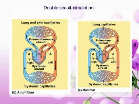 การวิเคราะห์ทางพันธุกรรมของราคา thrombophlebitis