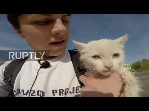 Help meow! Russian digger finds and saves wounded kitten in abandoned drainage system