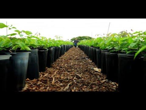 Meio Ambiente - PL528/21, que regulamenta o Mercado Brasileiro de Redução de Emissões - 01/10/21