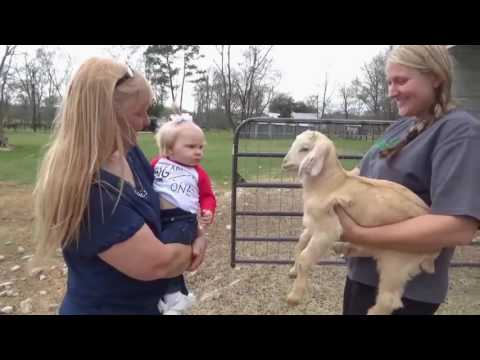 Cute Baby has a Conversation with a Screaming Goat