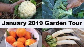 California Garden - January 2019 Garden Tour - Gardening Tips, Harvests & More!