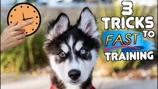 3 Tricks To Train Your Husky Puppy FASTER!
