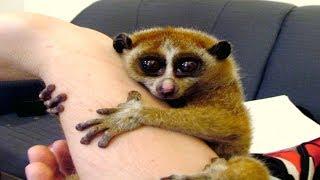 14 Rare Fascinating Primates