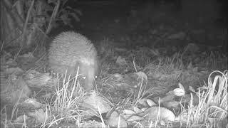 Wildlife Trail Camera - 29.10.2019