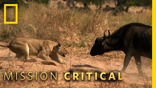Animals of the Year - Top 3 Moments   Mission Critical
