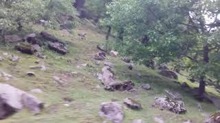 preview picture of video 'Traveling to Sharda Neelum Valley - DSS Quaid-i-Azam University Trip'