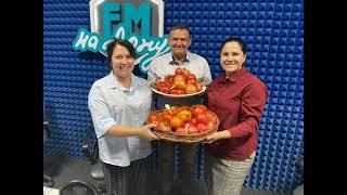 О заготовке семян томатов
