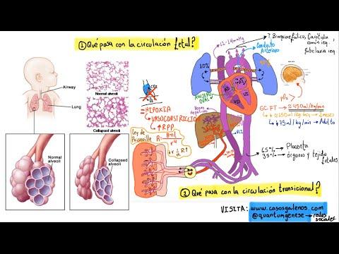 Hipertensión en 20 años se puede curar