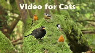 Videos for Cats to Watch : Birds Being Awesome