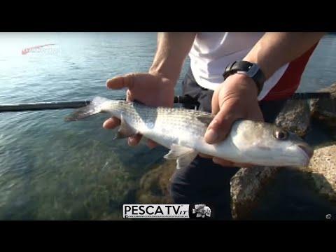 Cunnings da pesca per pesca estiva