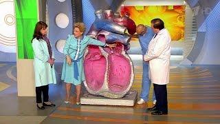 Частое сердцебиение.  Как успокоить сердце. Жить здорово!  (27.11.2015)
