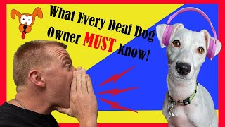 What you NEED to know about DEAF DOGS - How to Train, Teach and Live with a hearing impaired dog!