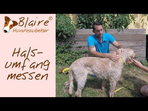 Blaire Hundezubehör -- Halsumfang messen -  - Hundehalsband Halsband Neopren Leder