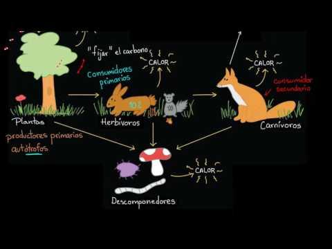 Flujo de energía y materia a través de los ecosistemas | Biología | Khan Academy en Español