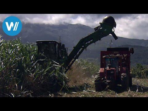 Rum auf Guadeloupe (360° - GEO Reportage)