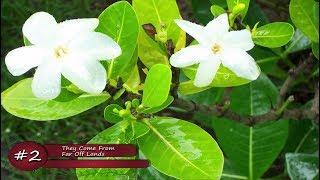 5 Common Myths Of Herbal Medicine & Medicinal Plants