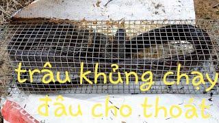 Thăm Bẫy Rắn Ngày Mưa Bão. Youtube Mạnh Nguyễn.
