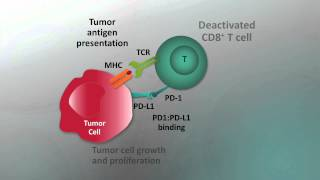 Immunotherapy for NSCLC - Video abstract 57550