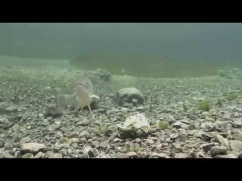 Tauchen in Tragöß Oberort, Grüner See,Tragöß,Steiermark,Österreich