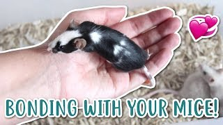 HOW TO BOND WITH YOUR MICE!