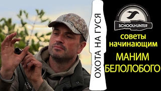 Белолобый гусь: особенности питания и обитания, изготовление манка для охоты