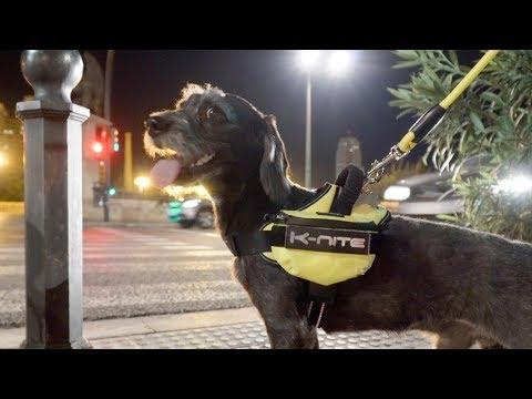Arnés y correa para perros K-nite