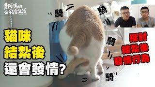 【貓結紮後還會發情?母貓發情跟太陽有關?】志銘與狸貓閒聊