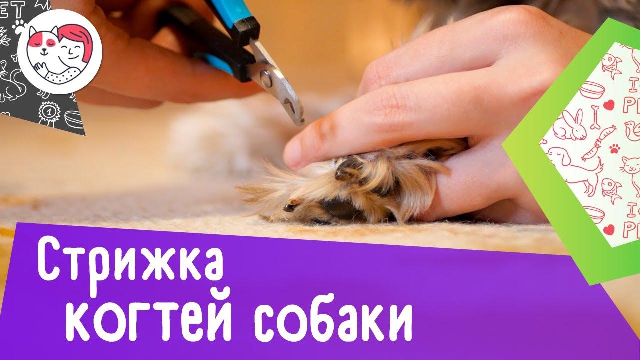 Как подстричь когти собаке: видеоинструкция