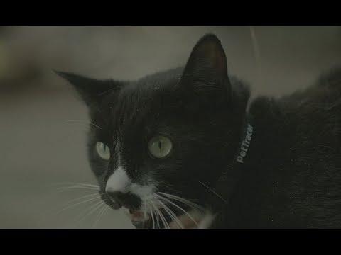 petTracer GPS Katzenhalsband