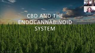 The Endocannabinoid System and How CBD Can Support It.