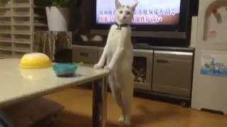 Cat on acid trip
