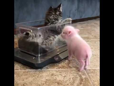 Anteprima Video Ecco come nasce una vera amicizia!