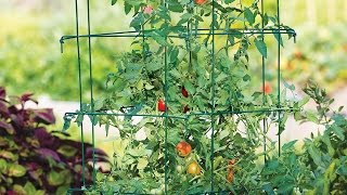 How to Support Tomatoes with Stakes & Cages