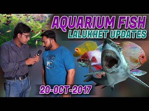Aquarium Fish shop Latest Updates Lalukhet 20-Oct-2017 Jamshed Asmi Informative Channel