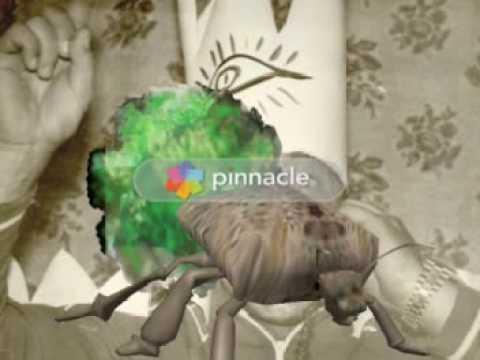 Paraziták a bőr alatt a tojásokon