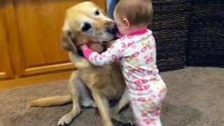 Bébés mignons jouant avec des chiens et des chats