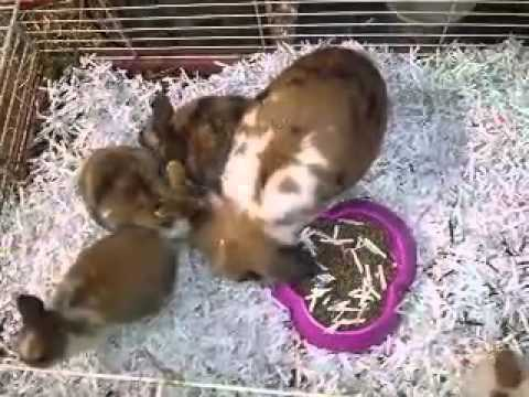 Download Pets bunnies for sale in Minnesota MN Mp4 HD Video and MP3