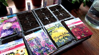 A Complete Guide on How & When to Seed Start Annual Garden Flowers Indoors: Save Money!
