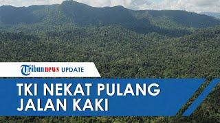 Dipecat Imbas Covid-19, 3 TKI Malaysia Nekat Pulang ke Indonesia Lewati Hutan, Satu Orang Ditemukan
