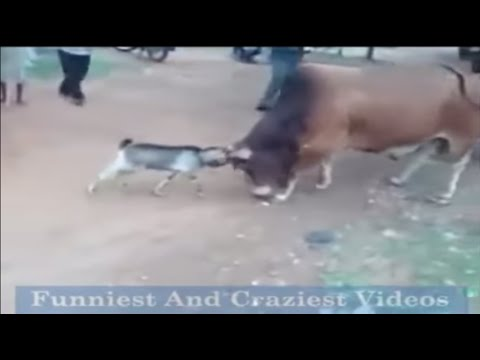 Top  Funniest And Craziest Videos Part1