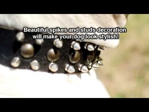 Designer Spiked And Studded Leather Dog Collar For Large Dogs