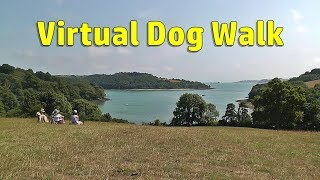 Walk Your Dog TV : Virtual Dog Walk - Summer Day Walking or Treadmill Video