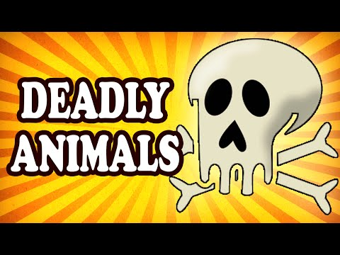 Top 10 Tiny Animals With Enough Poison To Absolutely Destroy You — TopTenzNet