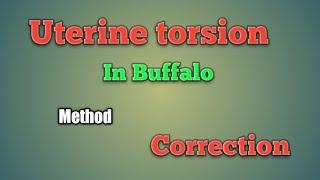 How Can Correct Uterine Torsion In Buffalo