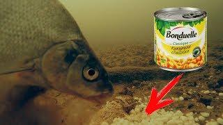 Какая рыба ловится в январе на урале