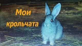 Мои крольчата