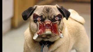 ЛУЧШИЕ ПРИКОЛЫ с собаками 2018 Самые смешные видео про собак и щенков  Подборка приколов на канале П