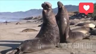 Нарезка приколов с Тюленями 2018