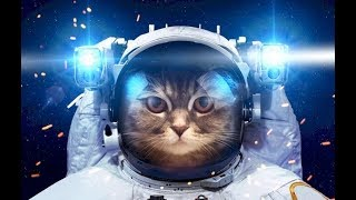 ИНТЕРЕСНЕЙШИЕ ФАКТЫ о КОШКАХ   1Часть Таинственные кошки  Mysterious cats